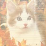 papier à lettre chat