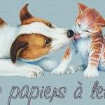papier à lettre pour outlook